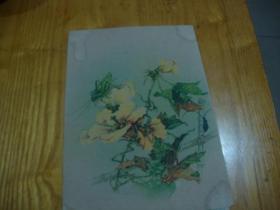 58年版,老年画<< 秋葵>>品图自定
