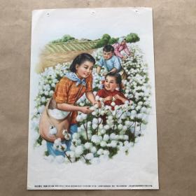 年画:棉花丰收,16开,李慕白绘,上海画片出版社1955年新1版2印