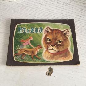 野生的爱尔莎 连环画(83年一版一印)