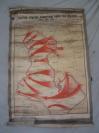 原裱 轴装 50年代 外文老地图一幅  122*85厘米