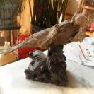 天然木化石--(鹦鹉)形状奇特