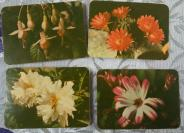 1978年北京市日历厂花卉1套4全,黄版