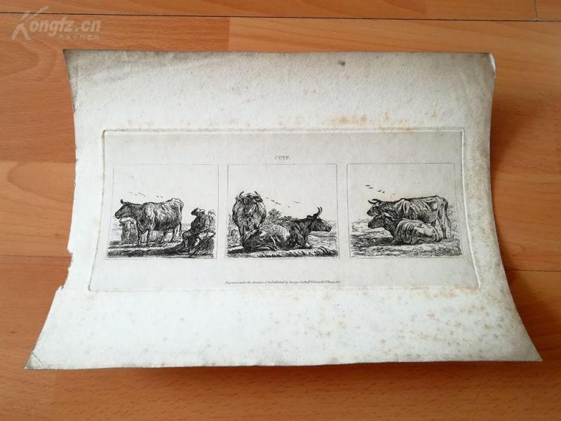 1815年铜版蚀刻《歇息中的牛,三种》( cattle resting)--克伊普(1620-1691,荷兰风景画和动物画画家)--28*22厘米