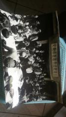 安阳市首届书法表演会以及书法有关照片17张