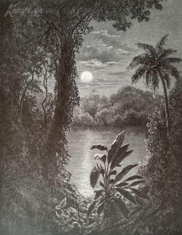 1878年木刻《熱帶叢林的月光》(a tropical moonlight)---選自當年藝術日志--紙張32*24厘米
