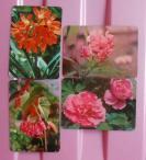 中国民航摄影版花卉1套4枚