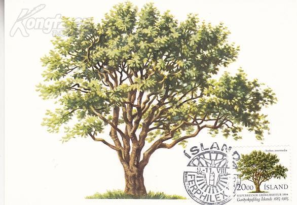 【外国邮品 冰岛1985年邮票花楸树 园艺协会百年 极限片】