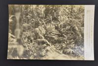 (乙4312)二战史料《读卖新闻老照片》1张 烧付版 1944年8月20日 日军攻打布干维尔岛 黑白历史老照片 二战老照片 读卖新闻社