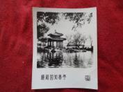 老相片一张,颐和园知春亭,品好如图。