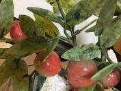 砡石   玉石桃雕刻细工   盆栽