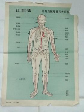 首现  全套15张 1965年6月一版一印《急救挂图》,4开,……实用性强
