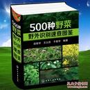 500种野菜野外识别速查图鉴  中医草药材识别图全集 生活常识蔬菜食物图集图书