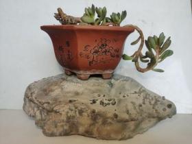 中国名石--陈炉奇石(正看:长寿龟;总之:看着像什么,友自己定吧);图案石