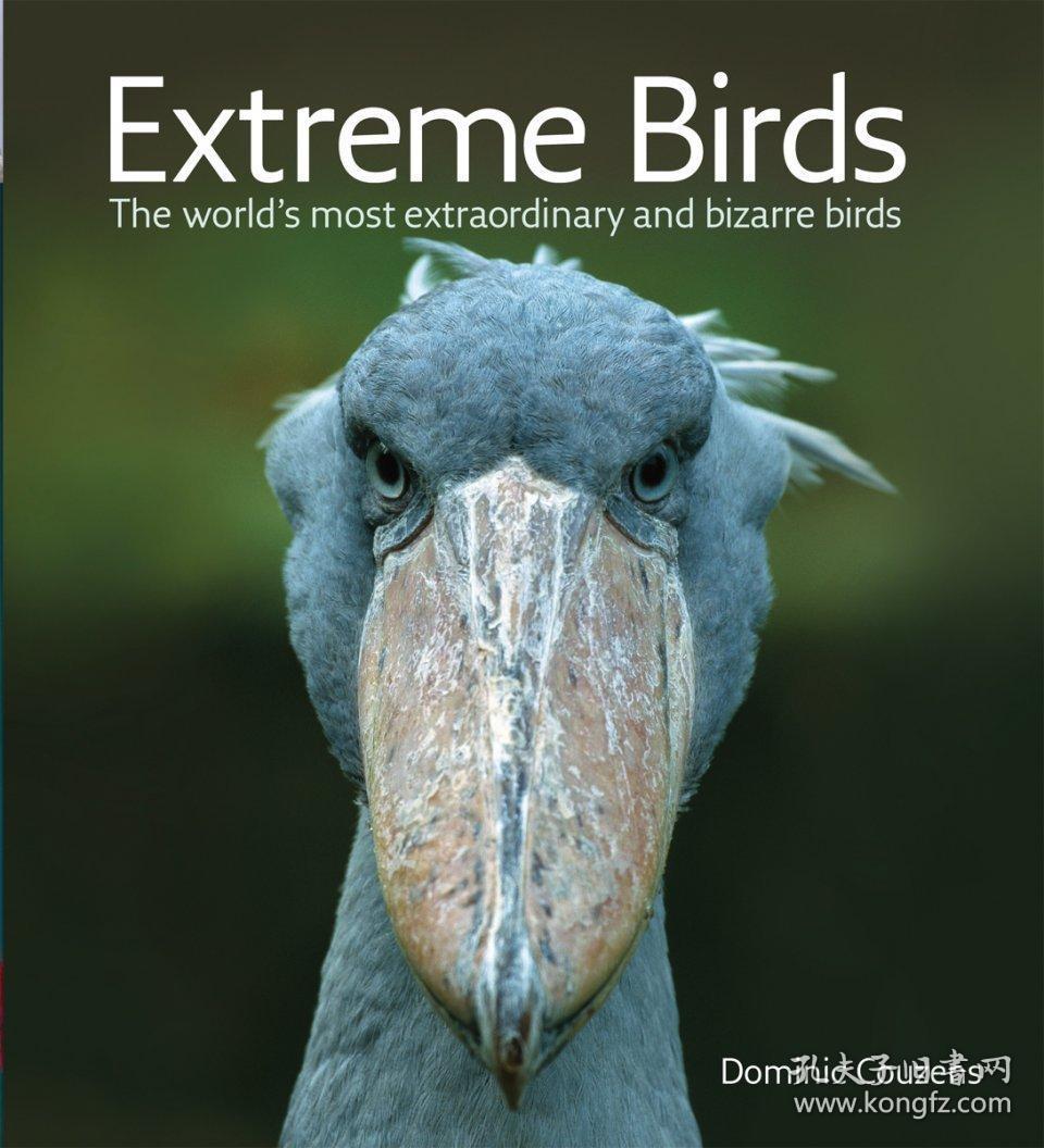 Extreme Birds-极端鸟类