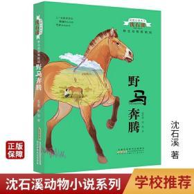 野马奔腾动物小说大王沈石溪野生动物救助站小学3-6年级阅读书籍