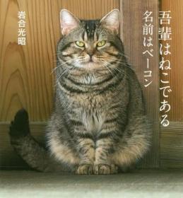 岩合光昭摄影集「岩合光昭の世界ネコ歩き 2」 猫咪写真 日版