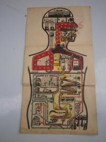 约民国   人体结构彩图  39x21