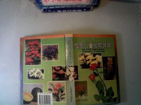绘图儿童植物辞典 /谈家桢 主编 上海辞书出版社 9787532602346