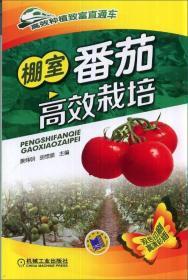正版高效种植致富直通车:棚室番茄高效栽培