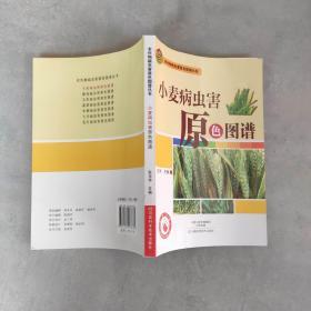 农作物病虫害原色图谱丛书:小麦病虫害原色图谱