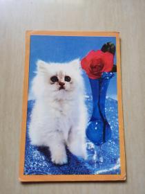 明信片 猫 1张