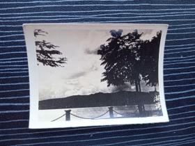 老照片17071-民国或五十年代-杭州西湖风景照-湖滨