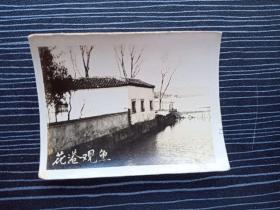 老照片17070-民国或五十年代-杭州西湖风景照-花港观鱼
