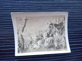 老照片17074-民国或五十年代-杭州西湖风景照-飞来峰