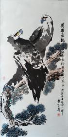 赵韦兴  雄鹰