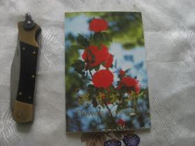 滇中花卉(明信片一套10枚)