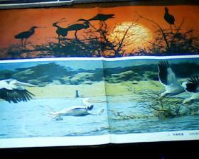 8开剪报画页 共2幅 印度篦鹭   鹈鹕起飞