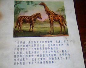 美术画页  正面长颈鹿  反面  凤鸟