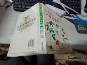 云南常用中草药彩色图谱:识药·采药·用药