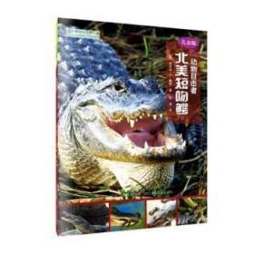 全新正版图书 北美短吻鳄:儿童版丽贝卡·赫希河北少年儿童出版社9787537695596 黎明书店黎明书店