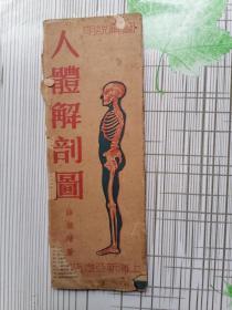 民國經折裝/薛德焴著==人體解剖圖(15折/一邊彩色一邊黑白)