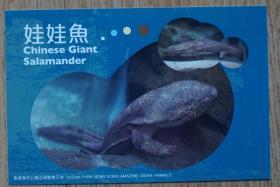 香港2010年动物航空邮资片新片娃娃鱼m80