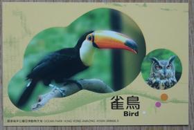香港2010年雀鸟猫头鹰航空邮资片新片m80