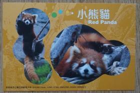 香港2010年小熊猫航空邮资片新片m80