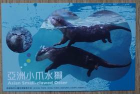 香港2010年动物航空邮资片新片 亚洲小爪水獭m80