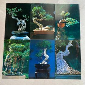 盆景精选明信片福建人民出版社出版植物艺术礼品收藏 10张全不带邮资