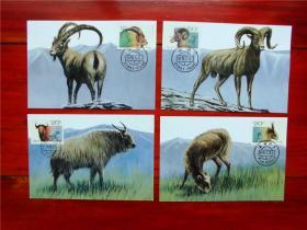 MC-11 野羊 极限明信片 一套4枚 集邮总公司