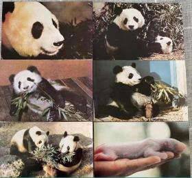 北京动物园 大熊猫 明信片 10张全不带邮资