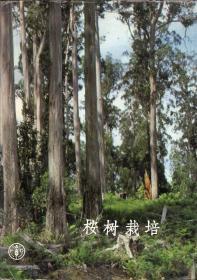 布面精装本(带护封):《桉树栽培》