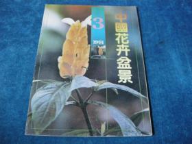 中國花卉盆景(1991年3期)