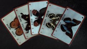 台湾票据、票证、车票、公交车卡·蝴蝶一套5枚