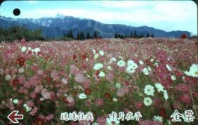 台湾票据、票证、车票、波斯菊花海·福寿山农场