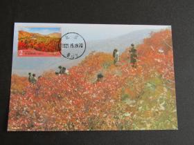 普32-2元北京香山红叶 邮票极限片 80年代北京片源 首日香山戳