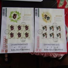 2020-1 生肖鼠 邮票小版张 原地鼠场首日挂号回执实寄封 双戳清