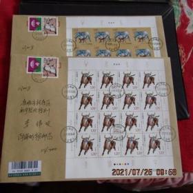 2021-1 生肖牛邮票大版 原地海城牛庄首日挂号实寄封2枚全 双戳清