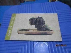 明信片:盆景(地)1959年版  外文出版社出版  12枚全  品如图  3-3号柜